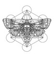 black and white moth over sacred geometry sign vector image vector image