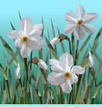 daffodil flowers isolated vector image vector image