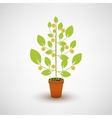 money tree with coins vector image vector image
