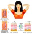 Armpit sweat vector image vector image