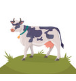 cheerful cow on a green meadow vector image