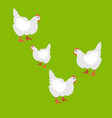 collection hen isolated vector image vector image