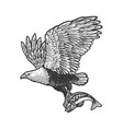 eagle carries fish sketch vector image vector image