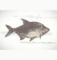 fish bream vector image vector image