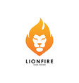lion fire logo template vector image vector image