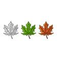 maple green and orange leaf vintage color vector image vector image