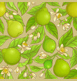 bergamot pattern vector image