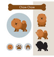 chow chow dog breed infographic vector image vector image