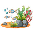 fish swimming on white background vector image vector image