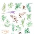 icons spice seasonings or herb flavorings vector image vector image