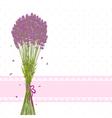 Purple Lavender Flower vector image vector image