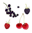 realistic berries on a white background vector image vector image