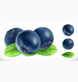 blueberry fresh fruit 3d realistic icon vector image