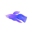 bright lilac betta fish with big flipper banner vector image vector image