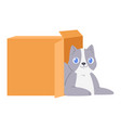 cat in box kitty pet character domestic vector image vector image
