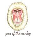 Face of Japanese monkey vector image