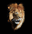 lion poster vector image vector image
