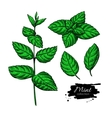 Mint drawing set Isolated plant and leaves vector image vector image
