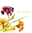 Nice watercolor lily frame vector image vector image
