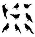 a set silhouettes winter birds vector image