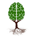 a tree in form a human brain two vector image