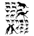 camel kangaroo tiger animal detail silhouette vector image