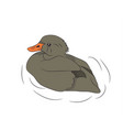 duck drake vector image vector image