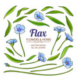 flax plant elements set vector image