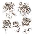 Hand drawn peony flowers set
