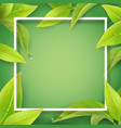 green leaves with water drops and white frame vector image vector image