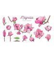 magnolia flower set hand drawn botanical 2 vector image vector image