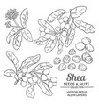 shea set vector image