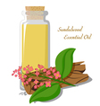 Essential oil of sandalwood vector image vector image