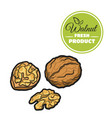 colored walnut on white vector image