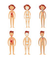 human internal organs in male and female bodies vector image
