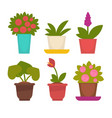 assortment of potted flowers vector image