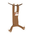 lets hang out cute basloth hanging on tree vector image