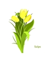 Spring flowers Tulip Flet design vector image vector image