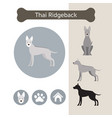 thai ridgeback dog breed infographic vector image vector image
