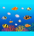 underwater scene with fish swimming vector image