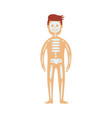 human skeletal system in male body - schematic vector image vector image