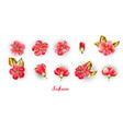 set red sakura flowers vector image