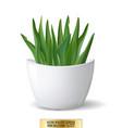 white flowerpot whith green plant on white vector image