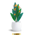 decorative flower in flower-pot on white vector image