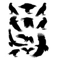 eagle birds animal detail silhouettes vector image