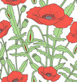 Elegant floral seamless pattern with poppy flowers vector image vector image