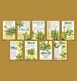olives original organic product poster set vector image