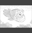 wrasse over a reef vector image vector image