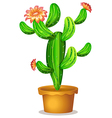 A cactus plant with flowers vector image vector image