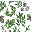 hand drawn colorful pattern with herbs vector image